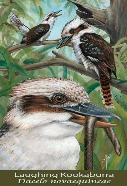laughingkookaburra