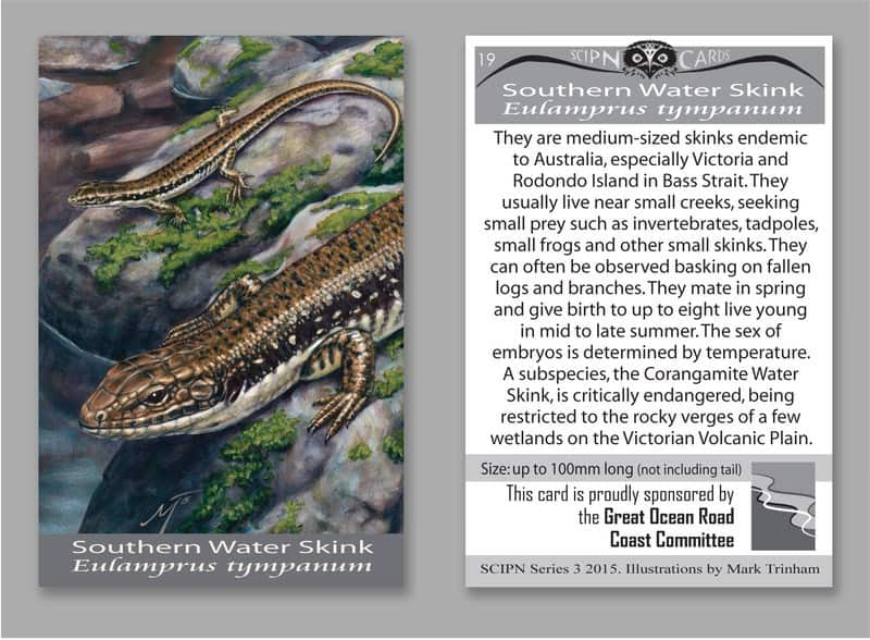 southernwaterskink